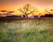 Valley Forge tree at sunrise, Valley Forge, Pennsylvania