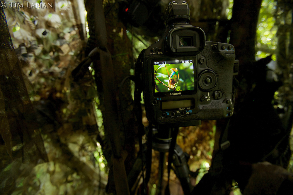 View of Tim Laman's camera in his blind where he just captured a portrait of the Wallace's Standardwing Bird of Paradise.
