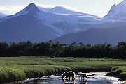 Grizzly Bear <br /> Ursus arctos<br /> Sow and cub crossing stream in front of glacier<br /> Katmai National Park