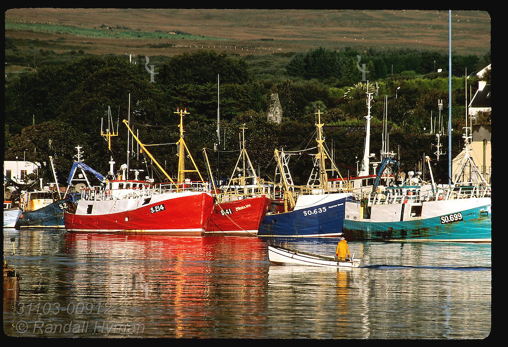 Fisherman pilots skiff across Castletownbere harbor framed by row of fishing boats on September morn; Beara Peninsula, Ireland.