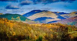 Autumn colour in the Trossachs National Park near Aberfoyle, Scotland<br /> <br /> (c) Andrew Wilson   Edinburgh Elite media