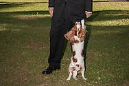 Brasilia, DF, Brasil, 19/06/2007, 09h03: O ministro Henrique Meirelles, presidente do Banco Central, com sua cadela em sua casa de Brasilia.   foto:Caio Guatelli