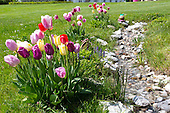 05 - Natural gardens