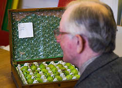 © Licensed to London News Pictures.04/08/15<br /> Egton, UK. <br /> <br /> <br /> Judge BRYAN NELLIST opens a box containing an entry into the annual Egton Gooseberry Show. <br /> There are only two Gooseberry societies left in the country. One in Cheshire and one at Egton in North Yorkshire. The annual show in Egton uses traditional Avoridupois scales to measure the weight of the berries and members of the society are fanatical about trying to grow the best berries each year. <br /> <br /> Photo credit : Ian Forsyth/LNP