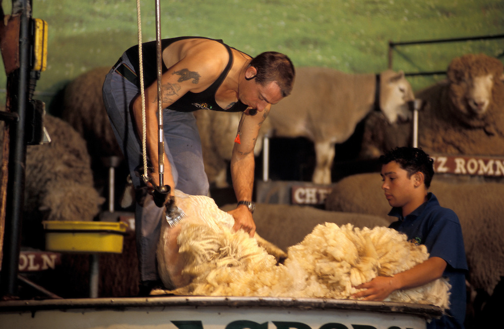 Sheep Shearing Performance Agrodrome Rotorua North Island