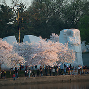 Crowds gather before dawn along the waterfront of the Tidal Basin during the cherry blossom festival to watch the sunrise over the water.