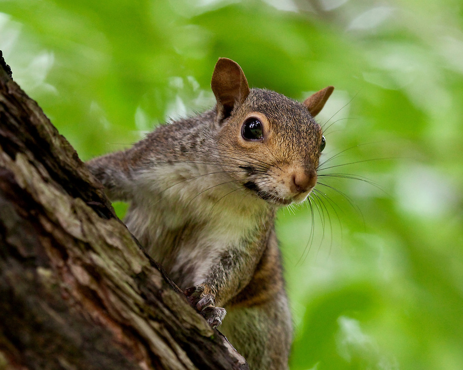 Yes, squirrels can smile! And this shot proves it.