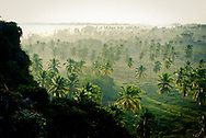 View of palm trees in morning mist from the Fort overlooking San Blass, Mexico