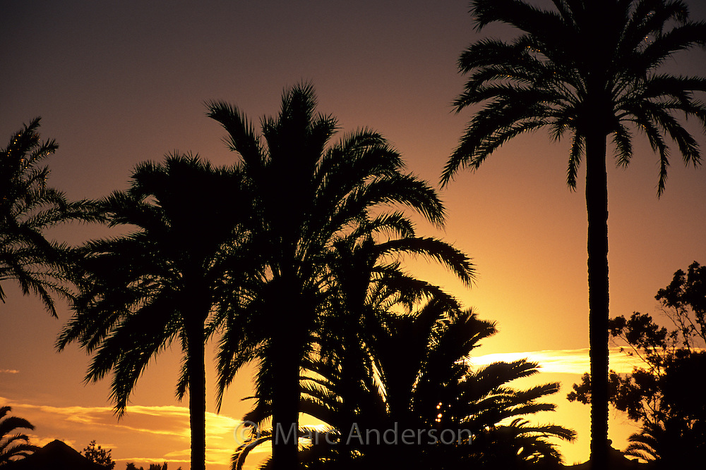 Silhouette of Palm Trees at Sunset, Marbella, Spain