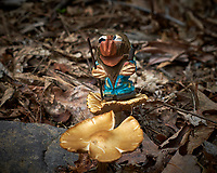Troll guarding mushrooms. Backyard spring nature in New Jersey. Image taken with a Fuji X-T1 camera and 60 mm f/2.4 macro lens (ISO 200, 60 mm, f/5.6, 1/500 sec).
