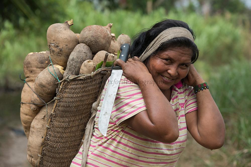 Amerindian woman with Yucca<br /> Wai Wai territory, region 9<br /> Parabara<br /> GUYANA<br /> South America