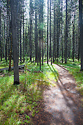 Delacey Trail to Shoshone Lake in Yellowstone ational Park.