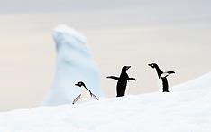 Antarctica #4 2014