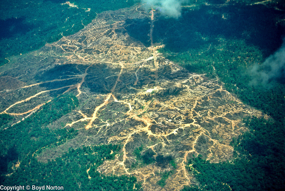 Rainforest destruction, Borneo; for palm oil plantation