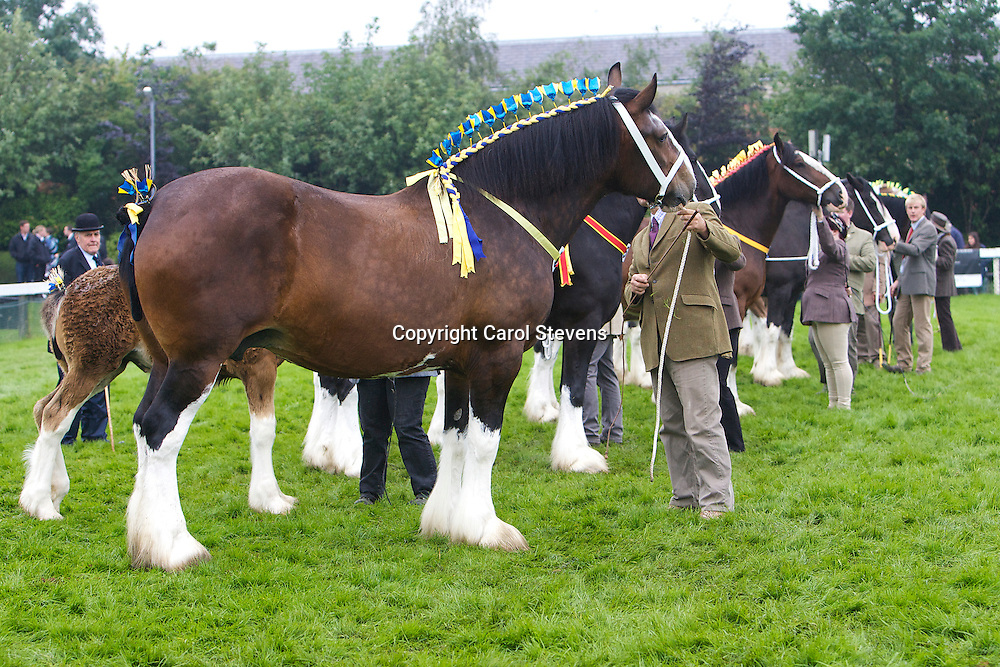 Great Yorkshire Show 2012<br /> Shire Horse Classes