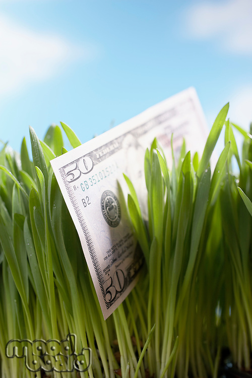Fifty-dollar bill in grass close-up