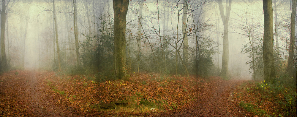 Crossing paths in a foggy forest in November. Textured photograph.<br /> <br /> License this through Gettyimages:<br /> http://www.gettyimages.de/detail/foto/fog-in-woods-lizenzfreies-bild/134052117?esource=en-us_flickr_photo