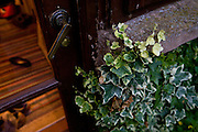 Ivy frames the door opening onto the garden in Ross-on-Wye