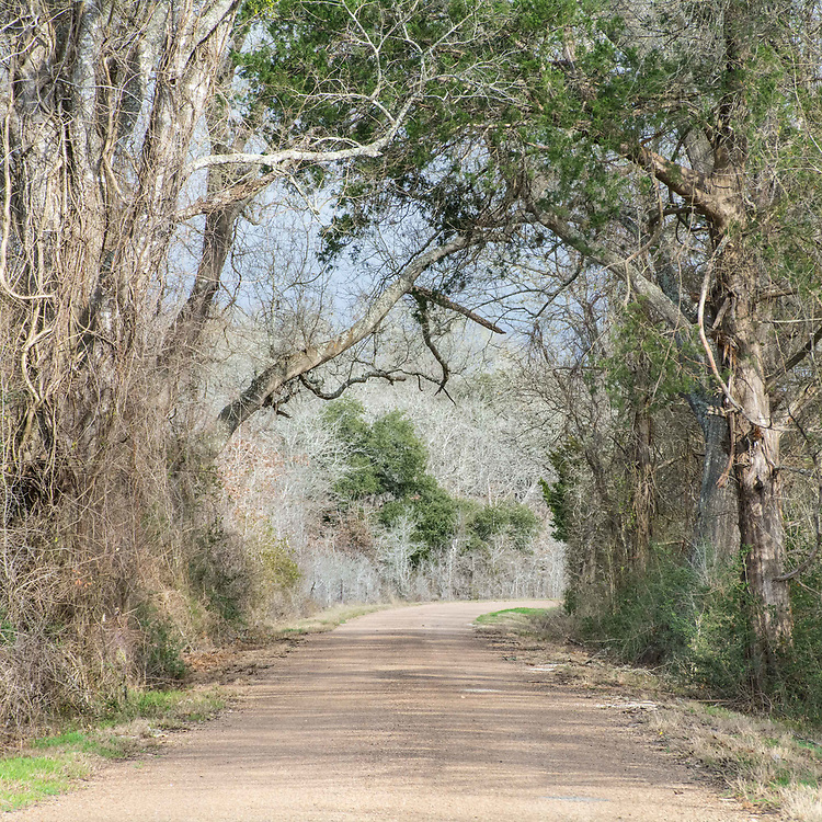 This is Boulton Creek road in Muldoon Texas, the road that leads to where my family lived between 1880 and 1950.