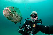 Photographer Michael Patrick O'Neill and Goliath Grouper, Epinephelus itajara, near the Mispah shipwreck offshore Singer Island, Florida, United States. Fish with spawning coloration.