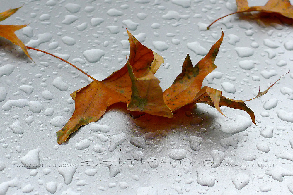 Water drops and autumn oak leaf on glass.