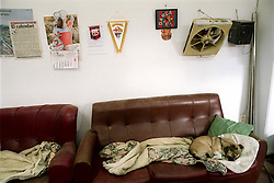 Barcelona, Catalunya, Spain<br /> A dog is sleeping in a fooball field.<br /> &copy;Carmen Secanella.