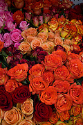 Rose flowers Hawaii