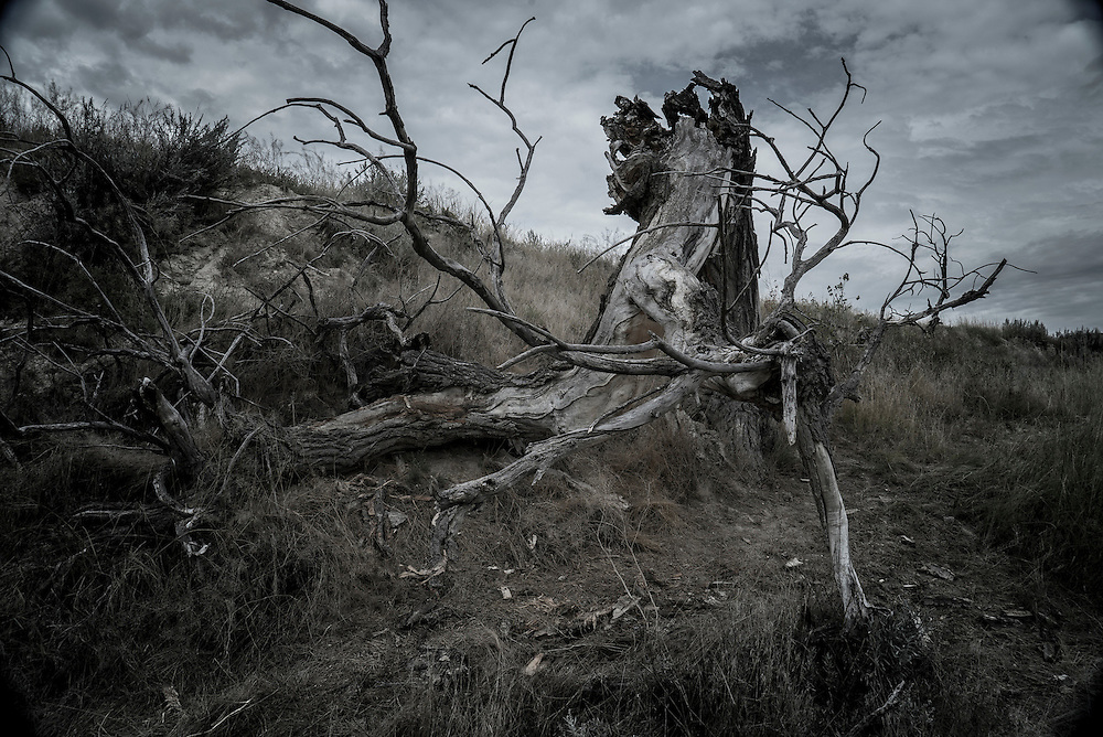 A sinister looking dead tree in the Badlands in South Dakota.