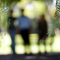 People standing on a park, selective focus on the foreground leaves, Seville, Spain