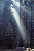 Forest, Sun, Smoke, Sequoia and Kings Canyon National Parks, California