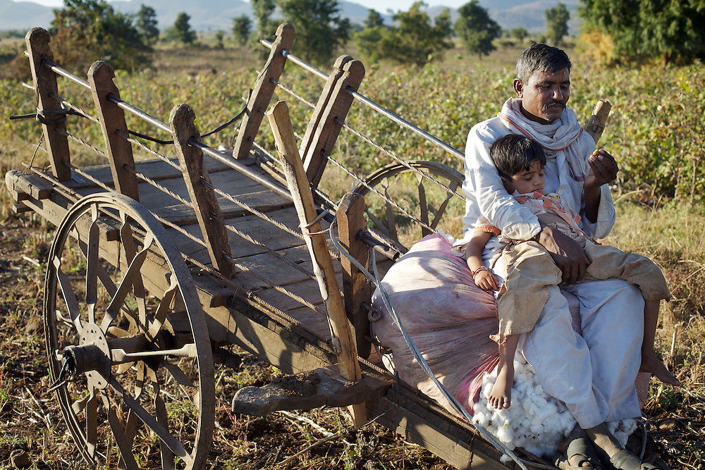 A boy takes an afternoon sleep on the lap of a cotton-farmer close to the village of Chitalwadi in the Vidarbha region of Maharashtra...Photo: Tom Pietrasik.January 2011.Maharashtra, India