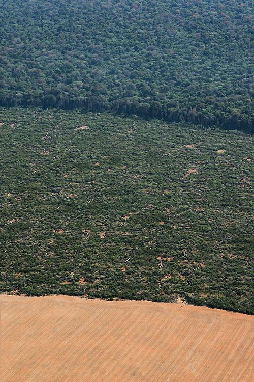 "08/08/05. Flight around Sinop and around the ""Parque das Castanheiras"". The Brasilian Nut Tree ""Castanheira"" is protected in Brasil, but plenty have been logged. © Daniel Beltra"