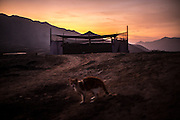 Meditators gather inside a makeshift tent as Surya, the cat named after the Hindu god associated to the sun, stands in front of it as the sun sets in the desert of Cieneguilla, a quiet location in the outskirts of Lima, Peru, Saturday, November, 21, 2015.
