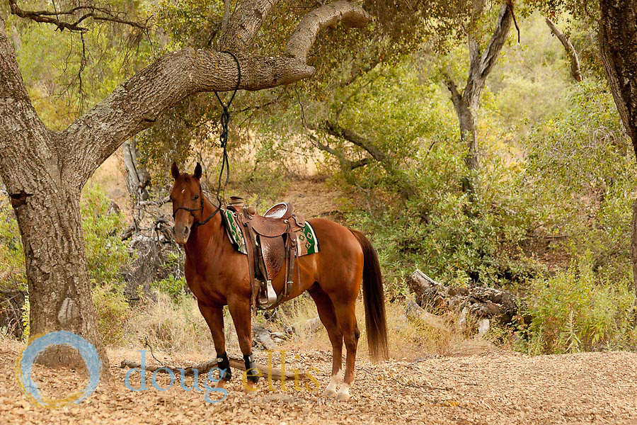 Richard Winters for Horse Illustrated Magazine, Thacher School, Ojai CA