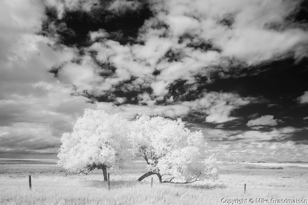 Trees and clouds, Val Marie, Saskatchewan, Canada
