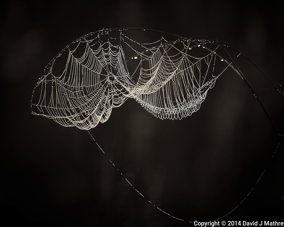 Dew Covered Spider Web at Sunrise. Big Cypress Swamp National Preserve in Florida. Image taken with a Nikon Df camera and 80-400 mm VRII lens (ISO 100, 400 mm, f/5.6, 1/100 sec).