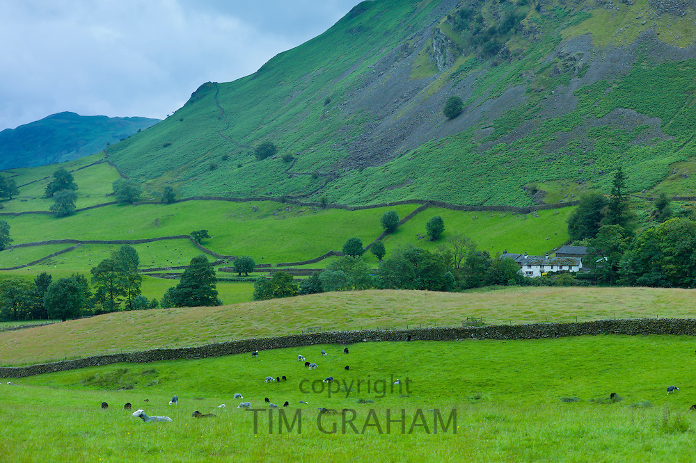Hill farm near Grasmere in the Lake District National Park, Cumbria, UK