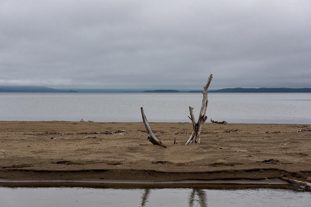 A tree near completion of its life cycle, Brooks Lake, Alaska.