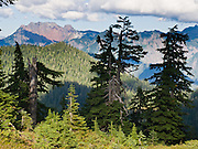 Alpine peaks of the Central Cascades rise above forest on Bald Mountain on the Walt Bailey Trail, in Mount Pilchuck Natural Resources Conservation Area (NRCA), near Verlot on the Mountain Loop Highway. Snohomish County, Washington, USA.