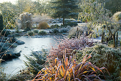 Looking over the frozen pond in John Massey's garden on a frosty winter's morning. Phormium 'Jester' in the foreground. Design: John Massey, Ashwood Nurseries