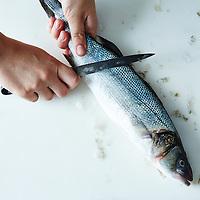 gut a fish
