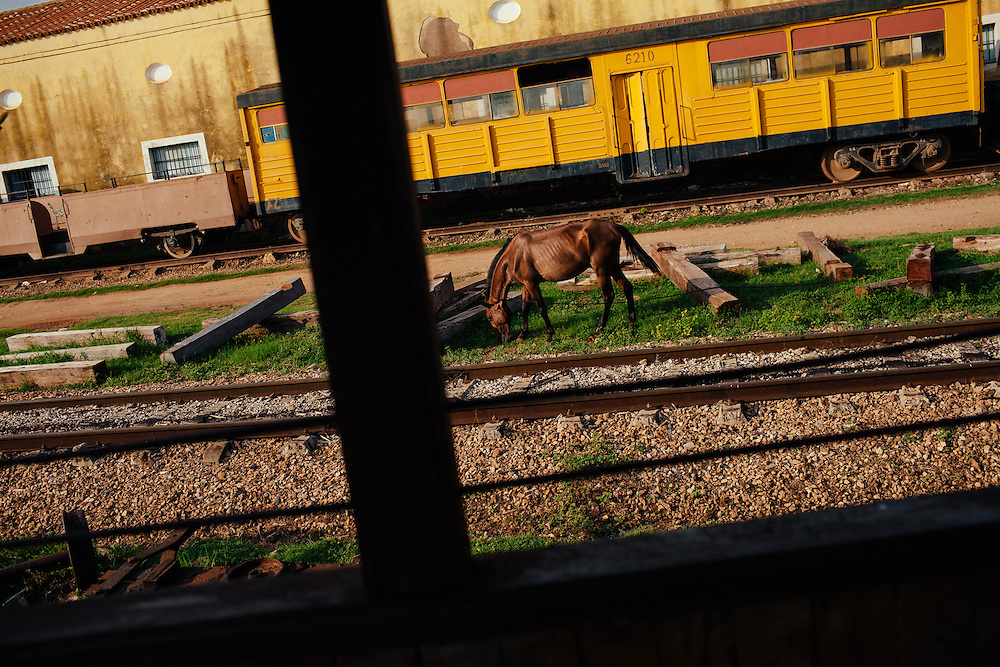 A horse grazes between abandoned railway carriages, Cuba.