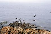 flock of birds landing on a little rock