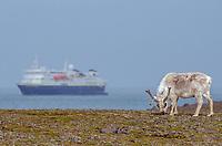 Svalbard Reindeer and the National Geographic Explorer at Russebukta on Edgeoya in Svalbard, Norway.