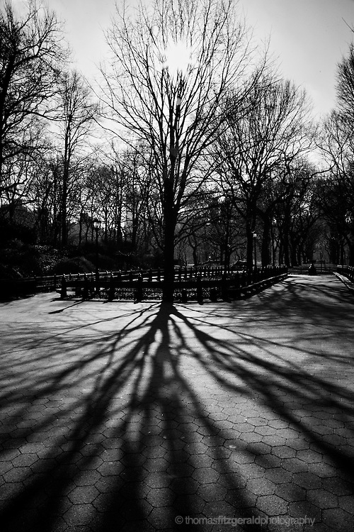 A high contrast Black & White Image of a shilouette of winter trees in Central Park.