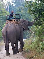 Mahout and Elephant, Bardia National Park, Nepal