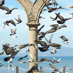 A huge flock of pigeons flying around Los Arcos in Puerto Vallarta Mexico