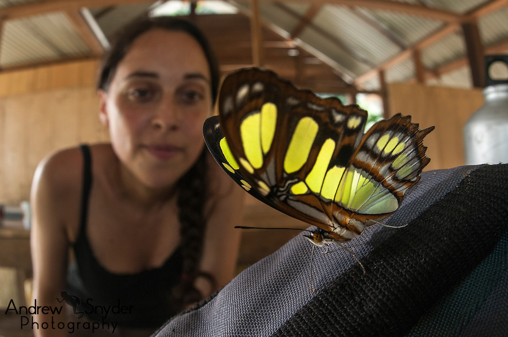 A researcher gazes at a Malachite butterfly. Iwokrama rainforest, Guyana.