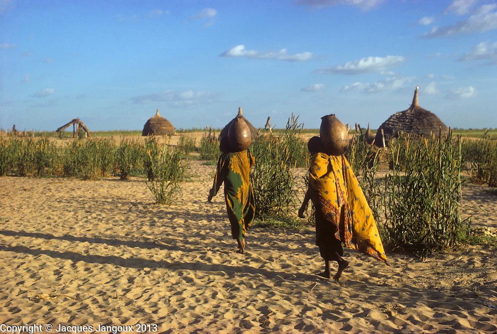 Africa, Chad, Kanem region, sahel, semi-arid tropics: Kanembu women fetching water across millet field near village: Ngueleydinga.