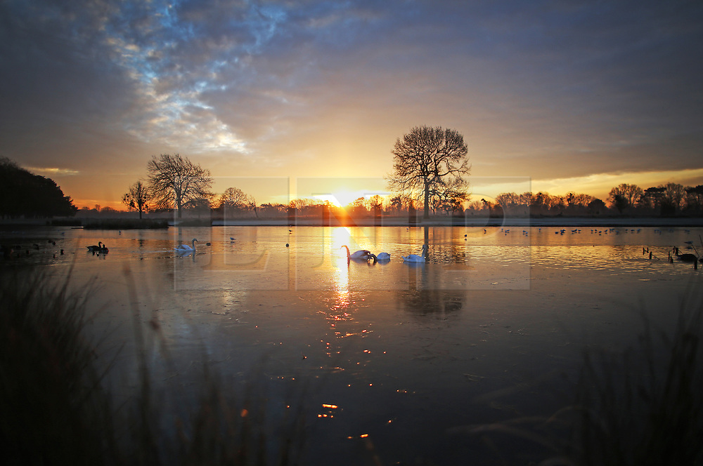 © Licensed to London News Pictures. 19/01/2016. London, UK. Birds are seen amongst the frozen waters of Heron Pond in Bushy Park. Overnight temperatures have dropped to as low as -4 centigrade. Photo credit: Peter Macdiarmid/LNP